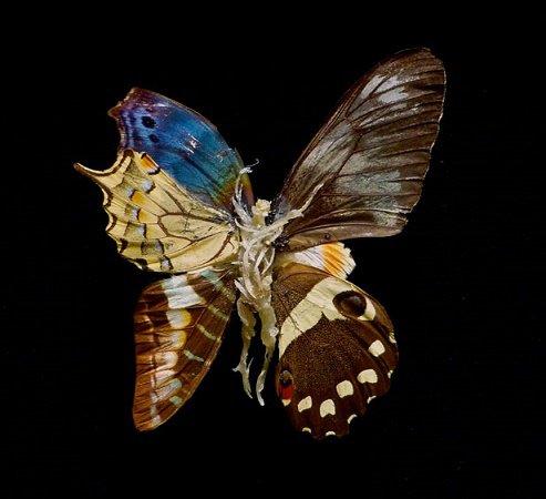 Minute papillon