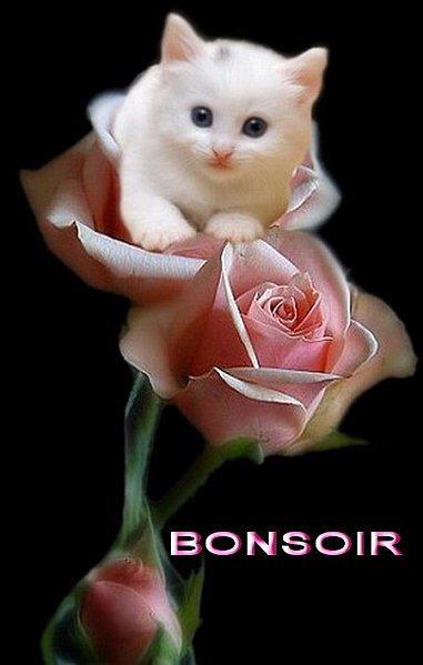 Bonsoir à tous bisous :)