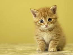 if you like cats plz like it