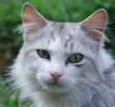 Photo de I-Love-Cats139