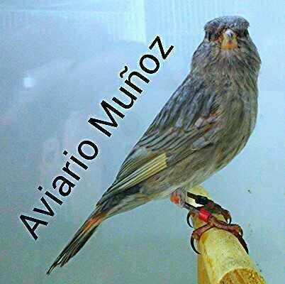 Aviario Muñoz