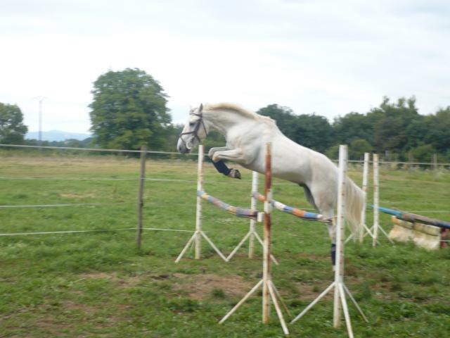 Présentation de nos chevaux !!!