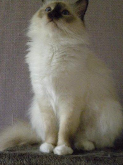 << Le chat est à nos cotés le souvenir chaud , Poilu , Moustachu et ronronnant , D'un paradis perdu >> Leonor Fin