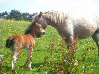 . Les chevaux sont pour l'homme les ailes d'un oiseaux . .