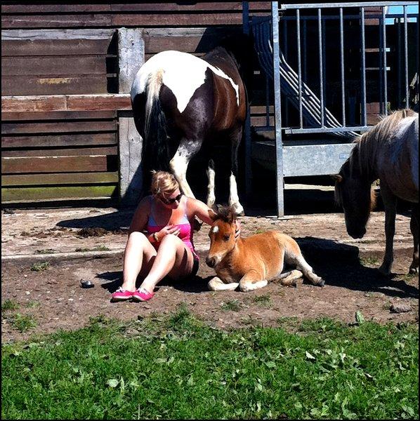 On ne choisit pas un cheval , c'est le cheval qui nous choisis. ♥ .