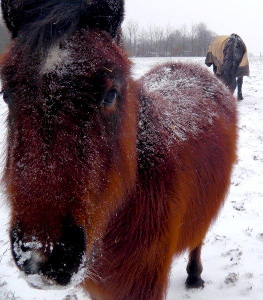 Suite photos neiges, Vendredi 18 Janvier 2013.