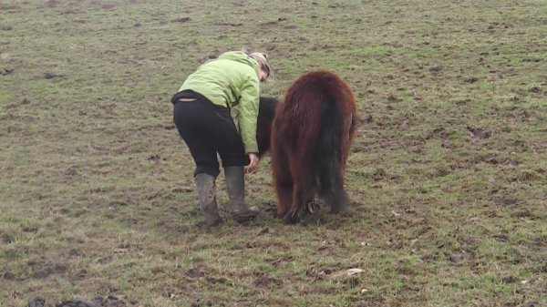 Petit poney, Petit poney, tu est tout bai et tout petit, Petit poney... ♥