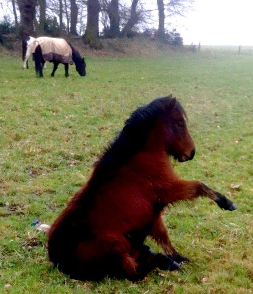 """""""Mon petite poney qui me fait vivre dans un monde magique."""""""