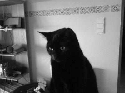 voici une chatte qui vas avoir 3 ams au mois de septanbre