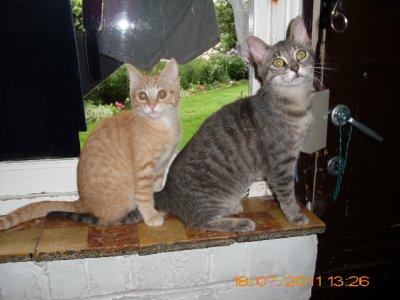 3 chaton