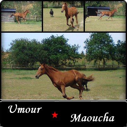 Umour Maoucha