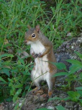 en amérique je peut toucher les écureil des que je sort de cher moi