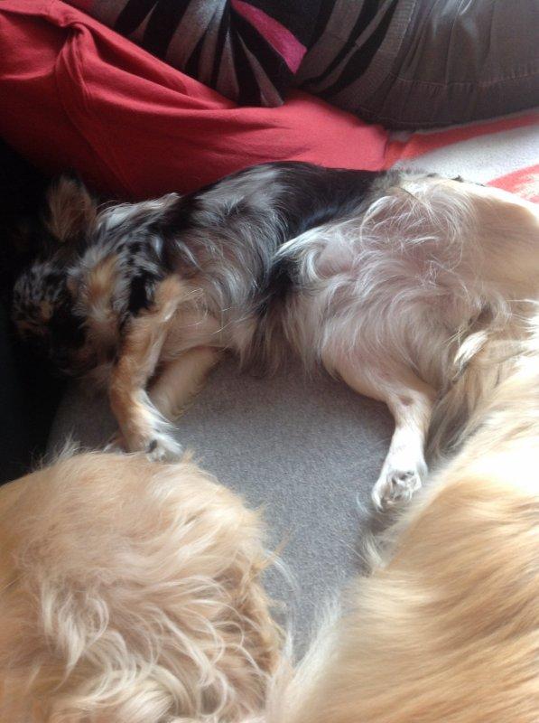 Une petite sieste s impose!!!