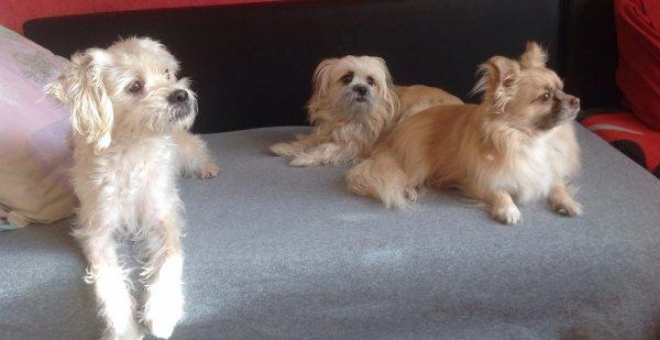Tina,Chanel et loki  qui regardent par la fenêtre !!!