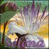 Selenai
