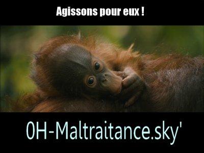 SOS-ANIMAAUX-EN-DETRESSE.sky' c'est ici maintenant :)