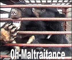Contre l'enfer des ours en Chine, mutilés pour leur bile.