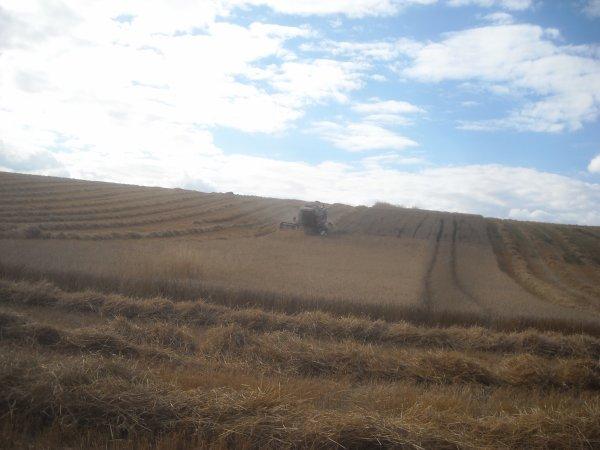Chantier de blé suite et fin.