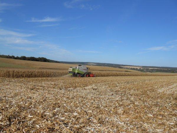 Chantier de maïs grain n° 1 fin.