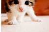 __ Love ce petit chat !