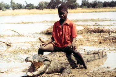 NOS CAIMANS EN AFRIQUE
