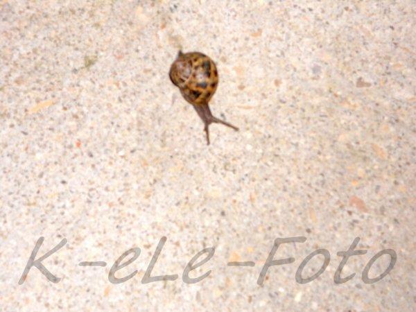 A snail - Un caracol