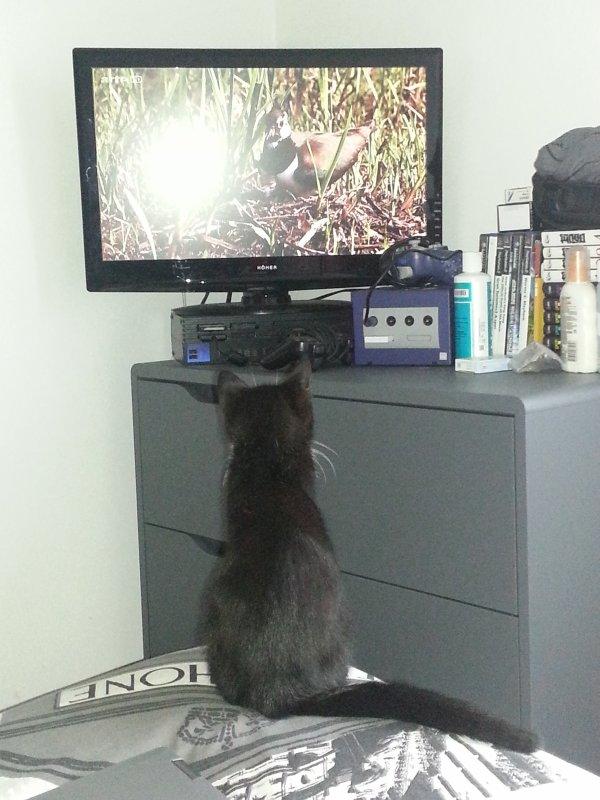 La télévision !