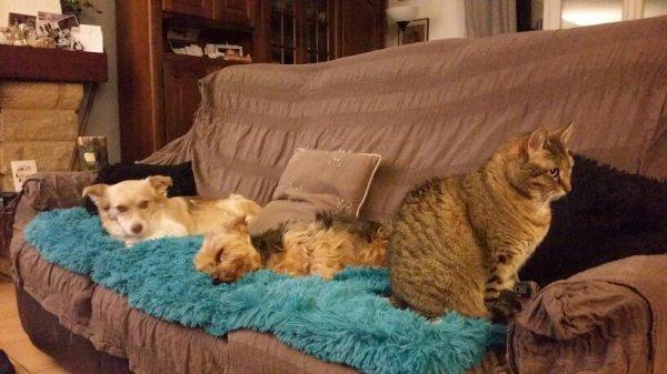 Canapé complet