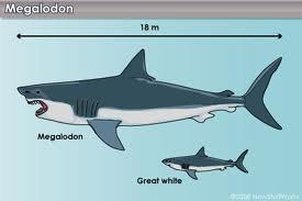 Le requin? Toute une histoire