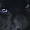 Wild-Ourson