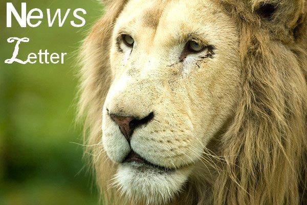 News ℓetter