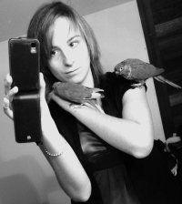 Kiwi Belle Oiseau