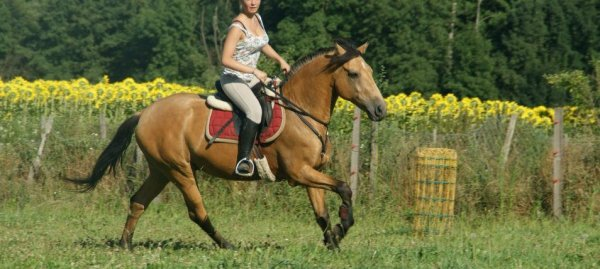 Ce fut un cheval appelé Arcadio