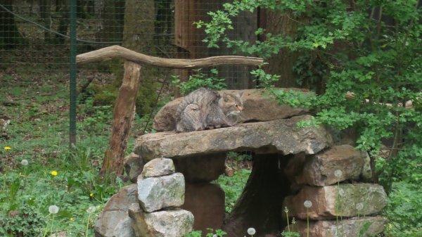 zoo de Hans-sur-Lesse (suite)