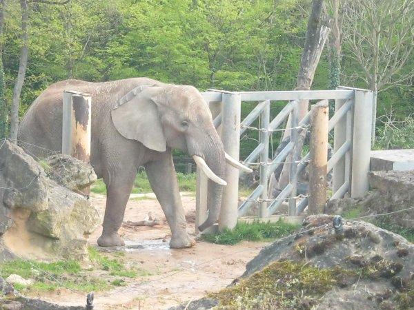 les animaux du zoo  et mon loulou en premier