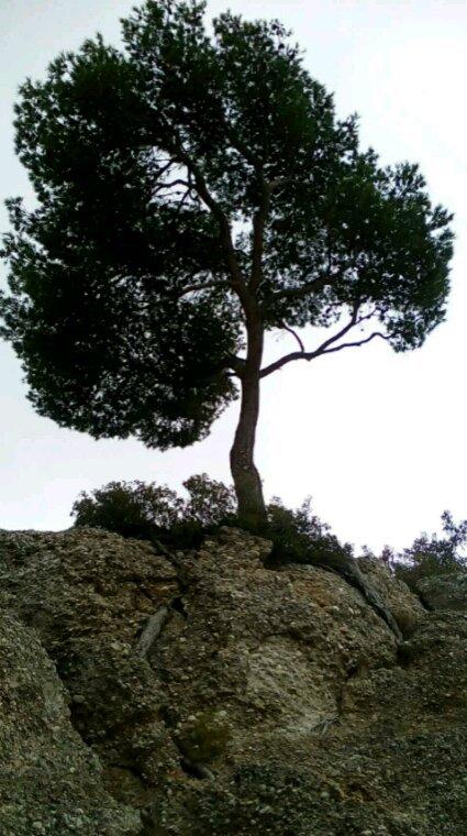 La vie et ses racines parle.