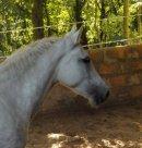 Photo de Horse-Like-Dream
