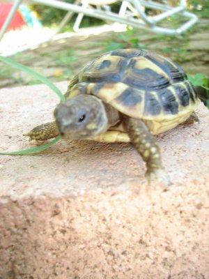 La tortue de terre n e g e r 39 s s t a r s for Avoir une tortue a la maison