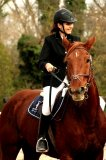 Photo de vente-equitation-13090