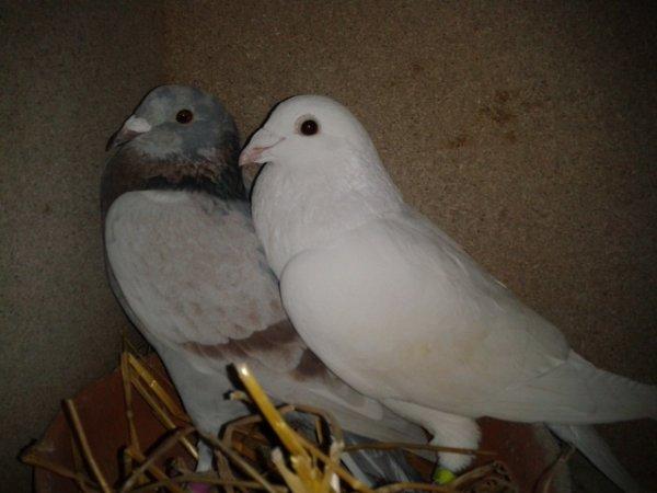 couple n° 5 pour 2013