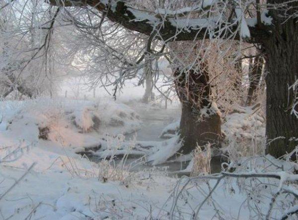 l'hivers et sont blanc manteau