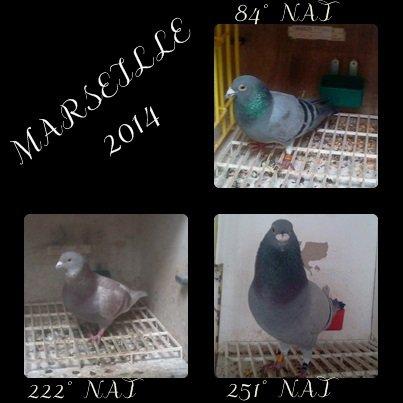 Marseille 2014