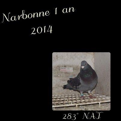 Narbonne vieux et 1an 2014