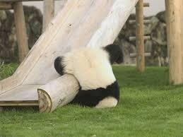 les pandas droguer