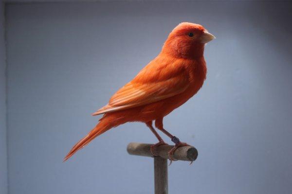 rouge intensif