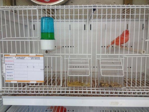 mise en place étiquette élevage 2016