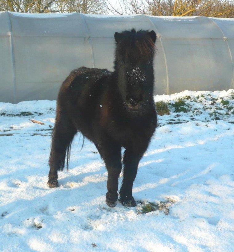 Poney adore la neige :P