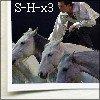Photo de So-Horses-x3