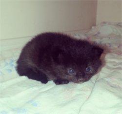 Le new traitement de Bill Gates =) + Mon new chat ^^