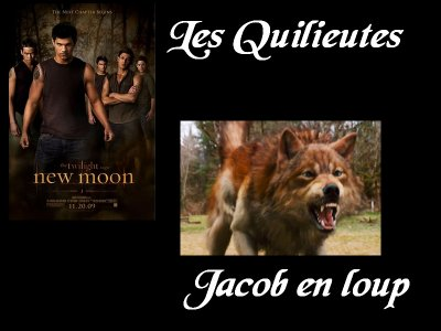 Le Clan Quileute : Description
